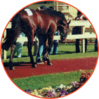 EQUINE SURFACES